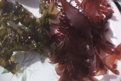Cooked and Raw Dulse